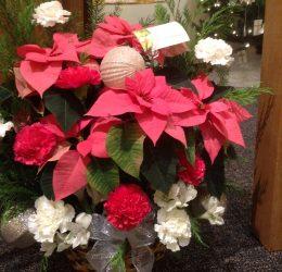 Poinsettia Plus fresh carnations and bulbs